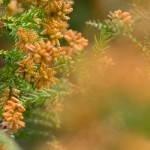 花粉症がよくなった人の共通点とは?ズバリ結果からいえること!